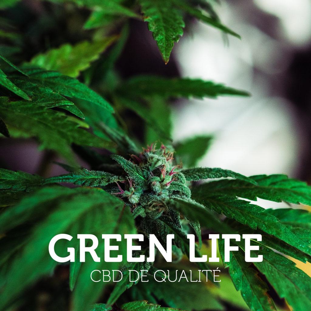 Réalisation projet Green Life France